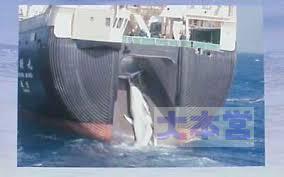 捕鯨母船のスリップウェイ