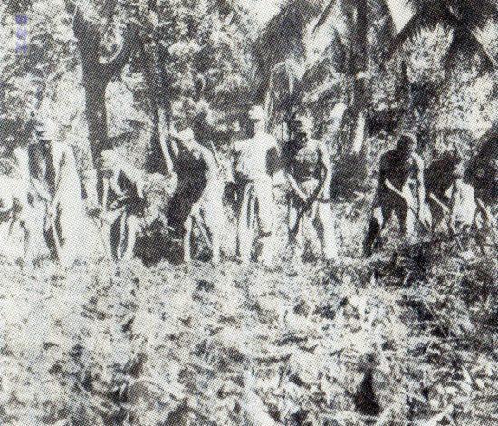 メレヨン島の農耕